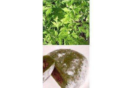 Yomogi / japanischer Beifuß / Samen 2