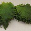 Frische japanische Shisoblätter 100 Stück 3