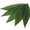 "Sasanoyo 100 Stück - Bambusblätter Größe ""S"" 4"