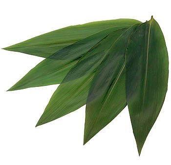 """Sasanoyo 100 Stück - Bambusblätter Größe """"L"""" 1"""