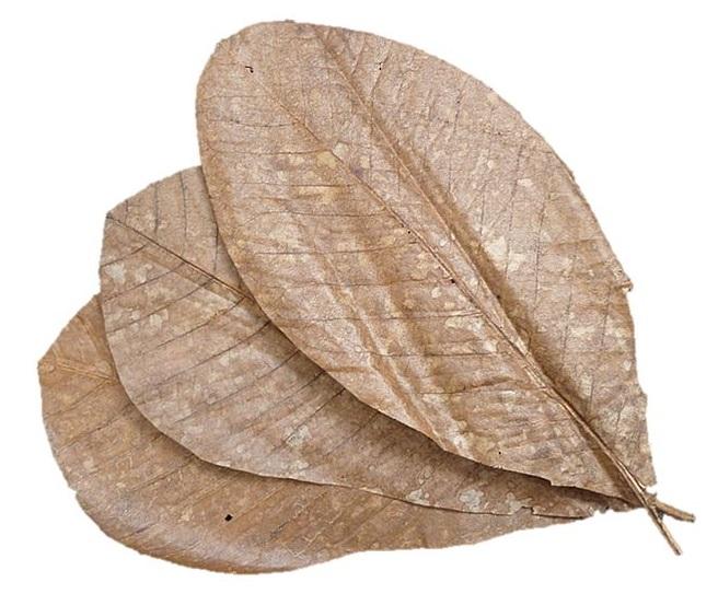 Mokuren no Ha 20 Stück - getrocknete Magnolienblätter 1